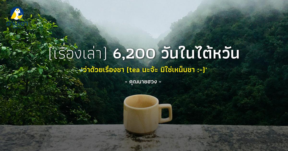 ว่าด้วยเรื่องชา (tea นะจ๊ะ มิใช่เหน็บชา😊)