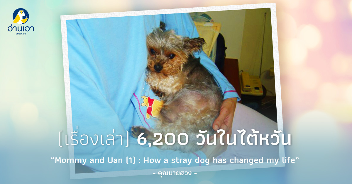 Mommy and Uan (1) : How a stray dog has changed my life