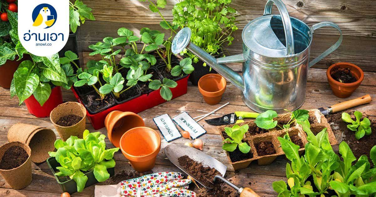 ปลูกผักเองก็ได้ง่ายจัง 8 หนังสือคู่มือสำหรับคนอยากปลูกผักกินเองที่บ้าน